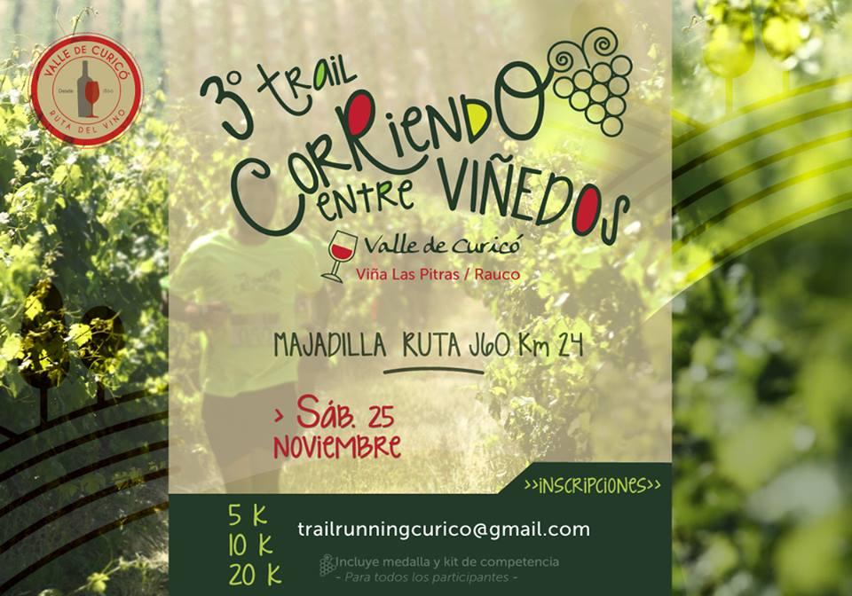 Trail Corriendo entre Viñedos - Rauco